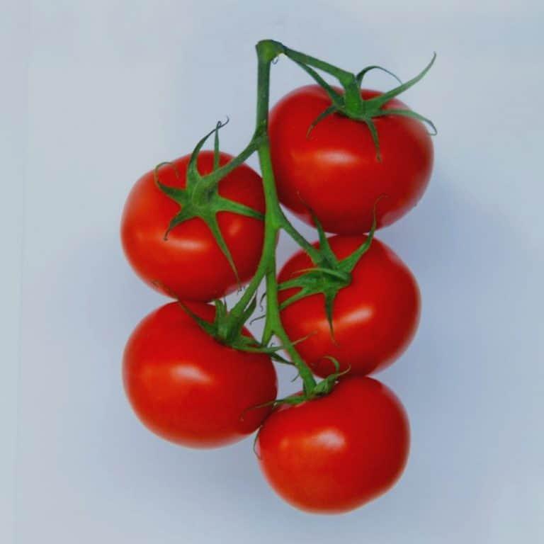 Tomaten Vetrasol Clear