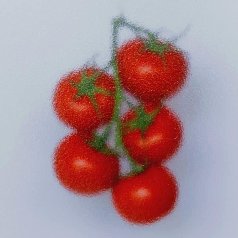 Tomaten Vetrasol Low Diffuse